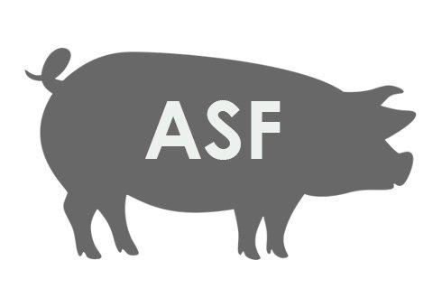 Zalecenia w związku z wystąpieniem na terenie kraju afrykańskiego pomoru świń